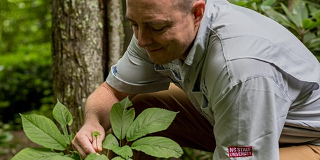 Appalachian Experience: Roots in Appalachia- Ginseng in Western NC (online) tickets