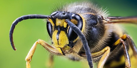 Wasps: so much to love about them - a talk by Gavin Broad tickets