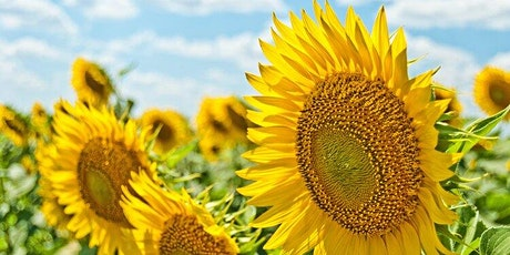 Yoga and Meditation in the Sunflower Fields! tickets