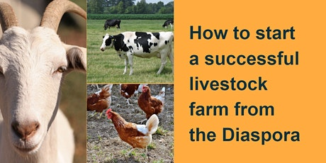 How to start a successful LIVESTOCK farm from the Diaspora tickets