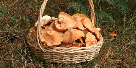 Easter Wild Mushroom Hunt tickets