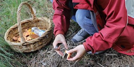 Wild Mushroom Hunt tickets