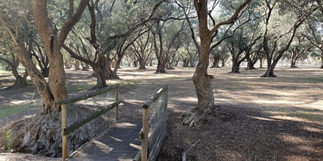 Guided Walk through the ancient Olive Groves at Gilberton (Parks 7 and 8) tickets