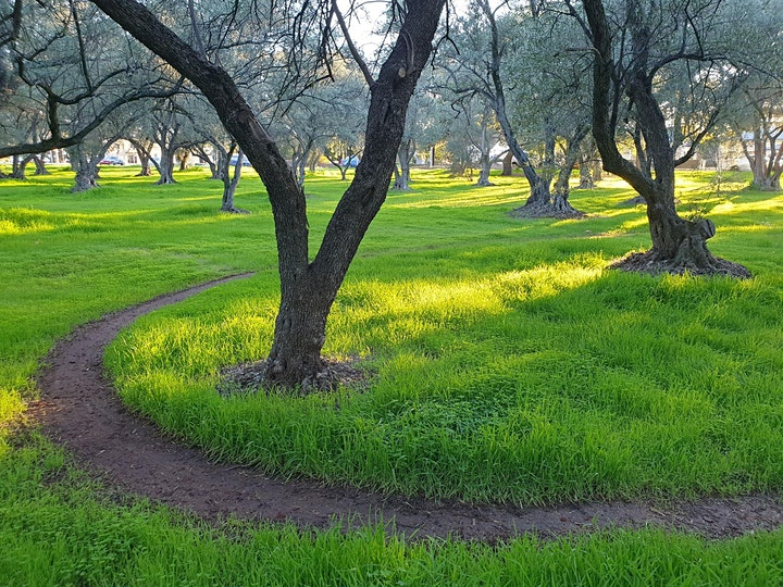 Guided Walk through the ancient Olive Groves at Gilberton (Parks 7 and 8) image