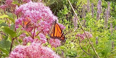 Webinar: The Wild and Wonderful World of Butterflies tickets