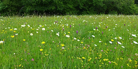 Why Meadows Matter – and why we need more of them tickets