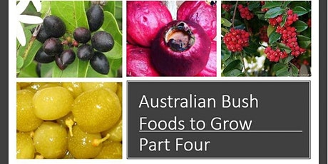Still More Australian Bush Food To Grow- PART FOUR tickets