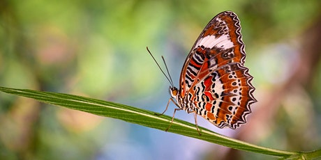 Macro Photography  – Bribie Butterfly House tickets