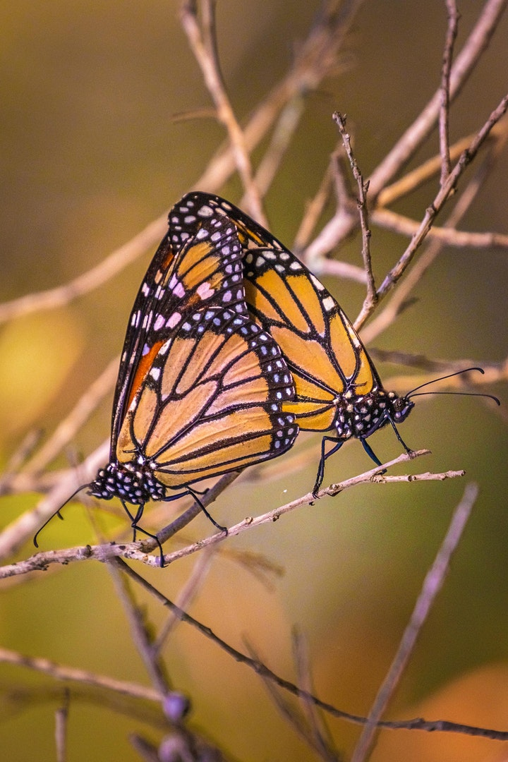 Macro Photography  – Bribie Butterfly House image