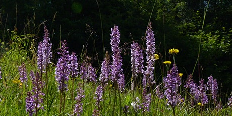 A year in the wildlife of Aston Clinton Ragpits - Online Talk tickets