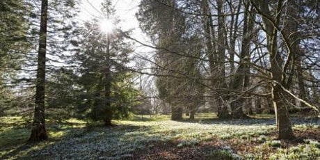 Timed entry to Kingston Lacy Garden and Parkland (18 Jan - 24 Jan) ingressos