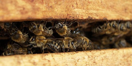Thriving Hive BEGINNING BEEKEEPING  Series 2021 tickets