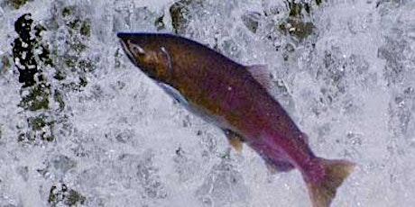 Salmon Tending Workshop tickets