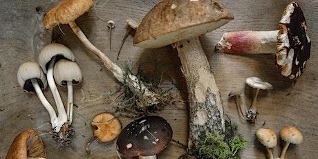 AHSCP August Meeting : Marvelous Mushrooms in Skin Care - Elina Organics tickets