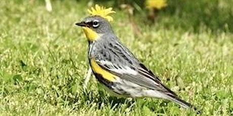 Birding Walk-About, Demuth Park tickets