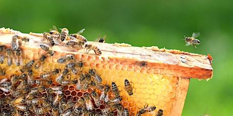 Sustainability - Urban Beekeeping @ Wanneroo Library tickets