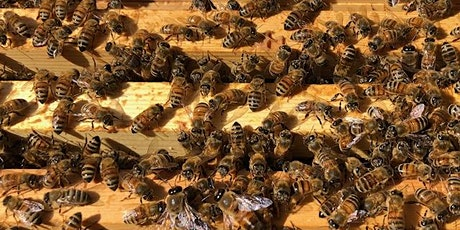 Fantastic Bees and Where to Find Them tickets