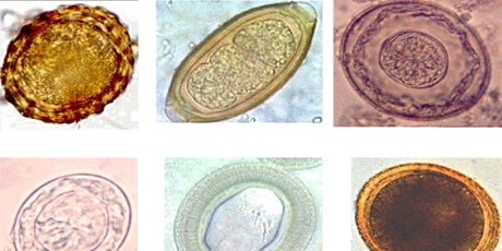 Genomics Lite: Infectious Diseases in context with Dr María Duque-Correa tickets