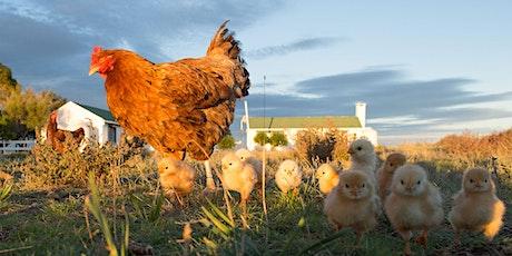 Poultry Seminar #3/5: CHICKS, CHICKS, CHICKS tickets