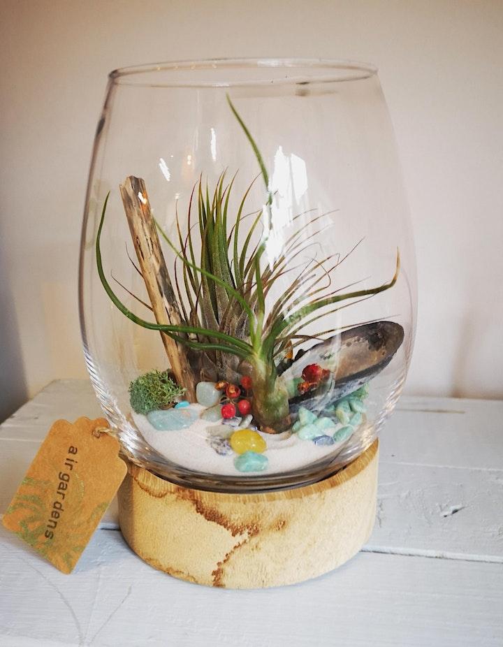 Create an Air Garden Workshop, March- Make Your Own Air Plant Terrarium image