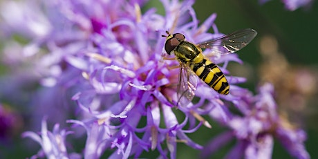 Fall Focus on Succession Planting and Pollinator Friendly Plants tickets