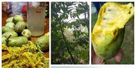 Foraging Level 1: Paw Paw Haul with Taylor Roman tickets