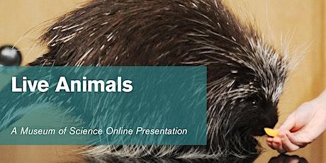 Live Animals - #Livestream tickets