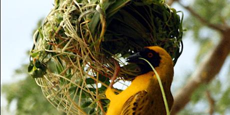 The Bird Museum's January Conservation Seminar Series tickets