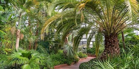 Virtual Tour: Palm House tickets