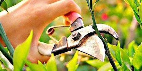 Pruning In Summer tickets