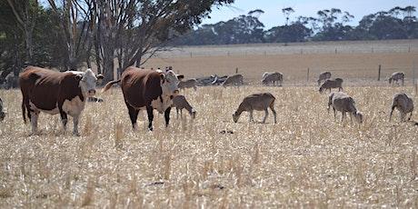 Livestock Forum: Rebuilding stock numbers (Naracoorte) tickets