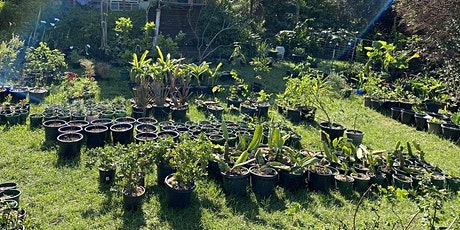 EDIBLE PLANT MOVING SALE!  HUNDREDS OF PLANTS, HUGE VARIETY tickets
