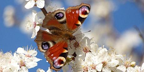Butterflies in Your Garden with Douglas Goddard tickets