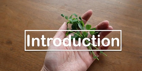 Easy Gardening: Indoor Edible Plants Free Workshop tickets