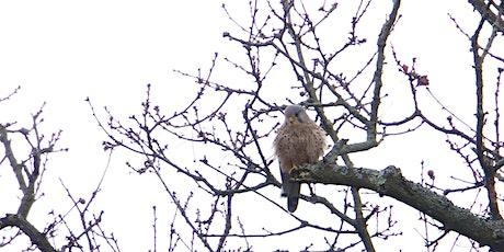 RSPB Big Garden Bird Watch at Kingston Uni - Roehampton Vale 2021 tickets