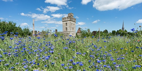 JUNE - VISIT THE GARDENS AT LISMORE CASTLE & LISMORE CASTLE ARTS tickets