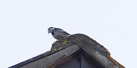 RSPB Big Garden Bird Watch at Kingston Uni - St George's Medical School tickets