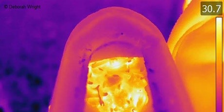 Thermal Imagery WFfW Webinar tickets