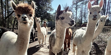 Creekwater Alpaca Barn Tours tickets