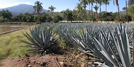 TEQUILA 101 Part 2: AGRICULTURE tickets