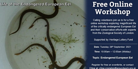 Online Volunteer Workshop - Life of the Endangered European Eel tickets