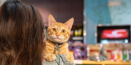 WFH Event - Cat Chat with Dr. Bales tickets