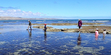 Aldinga reef ramble - Encounter Marine Park tickets