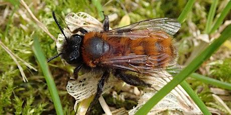 Mining Bees Webinar tickets