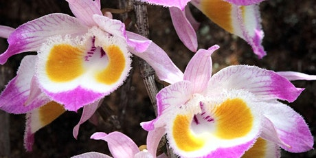 Orchids, Ancient Oaks  & Hungry Leeches- A botanical journey through Bhutan tickets