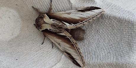 WILD WEDNESDAY Live moth talk tickets