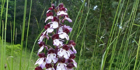 Bee Active - lend a helping hand to orchids and insect species billets