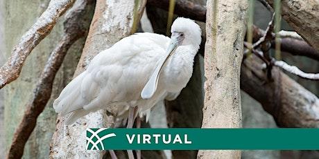 Live Virtual Zoo Tours tickets