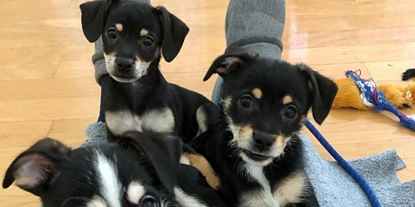 3/6/21 Online Dog Foster Orientation tickets