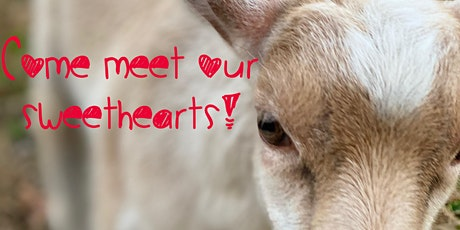 Valentines Day Goat Yoga: February 13th 1:30-3:00pm tickets